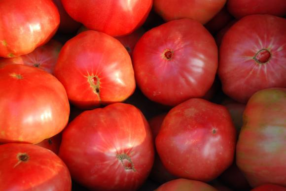 Прогнозите на CAPA са за спад в производството на домати това лято