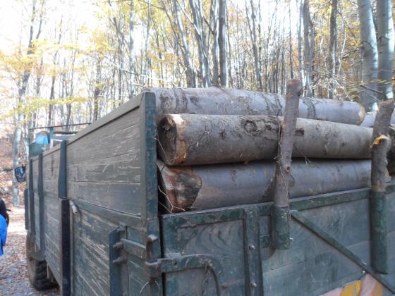 На 4 юли WWF представя анализ на незаконния дърводобив в България