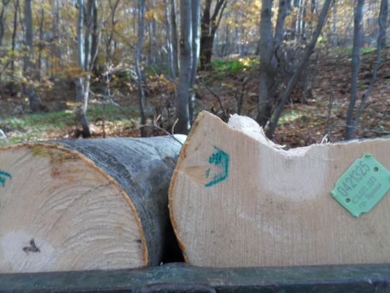 Незаконната сеч в България надвишава с една трета законния дърводобив