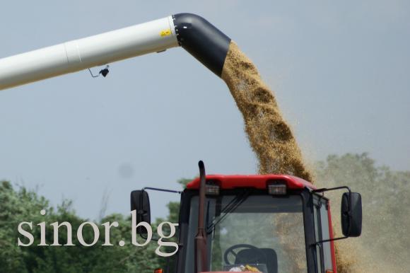 Цената на пшеницата на борсата в София дръпва леко нагоре