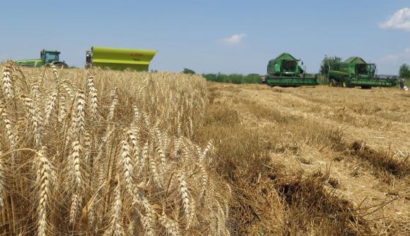 На Софийската борса продавачите искат за тон пшеница по 320 лв.