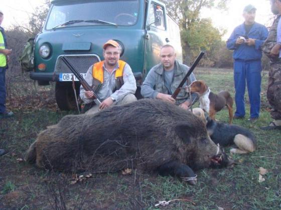 Забраниха груповият лов на дива свиня