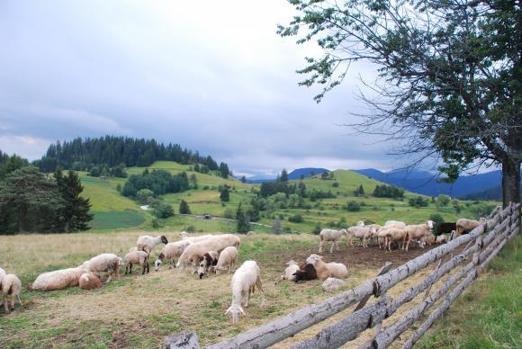 Животновъдите от Ямболско и Бургаско са получили малко над 2 милиона лева помощ по de minimis
