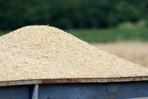 Средните изкупни цени на ечемик, хлебна пшеница и слънчоглед бележат повишение с до 7,7 процента за седмица