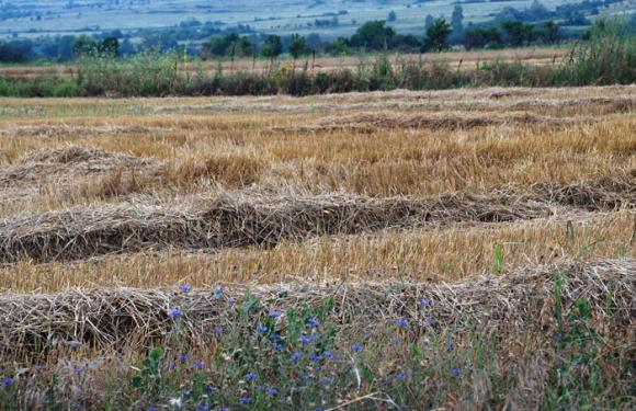 Сушата в Европа предвещава фалити на фермери