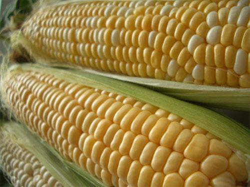 Сладката царевица печели все по-голяма популярност  в Германия