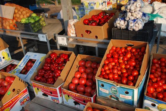 Сериозен спад в производството на домати се очаква тази година заради дъждовете