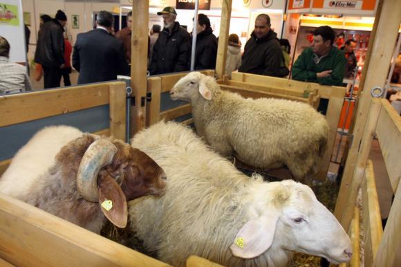 В Болярово започна вземането на втори проби, без животните в стопанството на Ана Петрова