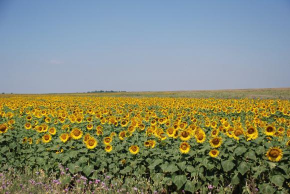 На фона на сушата в Западна Европа и августовските прогнози не дават надежда за сухо лято в страната