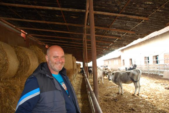 Да опитаме българско-швейцарско сирене от родна ферма