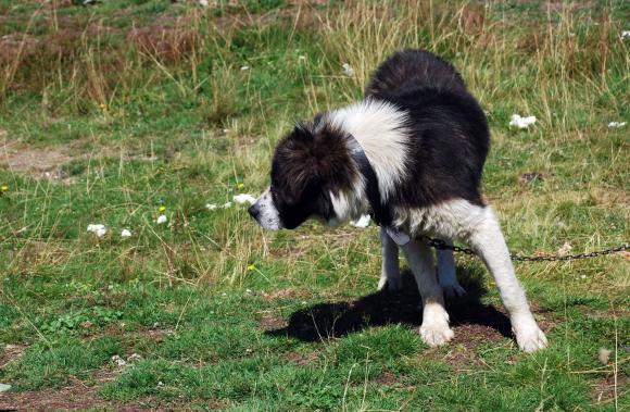 Само петнадесет от общо 265 общини нямат приети общински програми за безстопанствените кучета