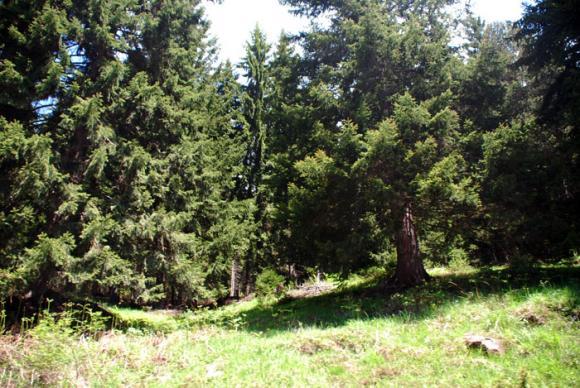 Демонстрация на методи за инвентаризация и стопанисване на разновъзрастни гори