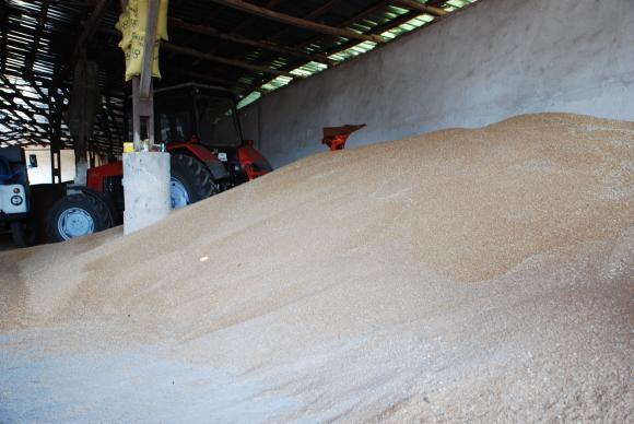 ОЛАФ нанесе нов удар на нелегалната търговия с растителни препарати