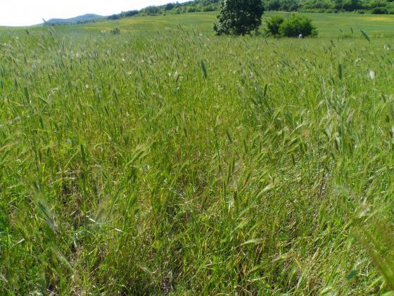 Фермери питат дали сроковете за косене на ливадите ще се удължат до края на месеца