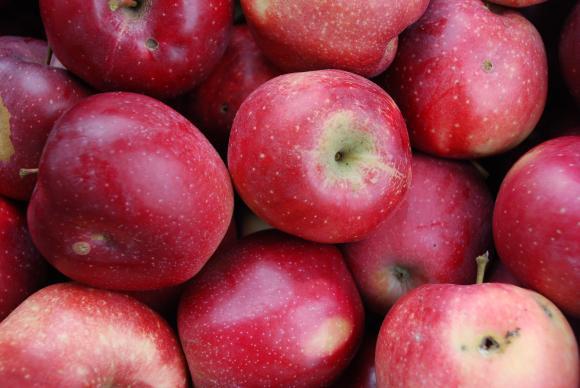 """Агробизнесът със сигнал за изкуствено създадени условия в избора на доставчици по схемата """"Училищен плод"""""""