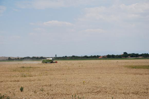 Не вярвайте на слуховете. Украйна няма да ограничава износа на пшеница