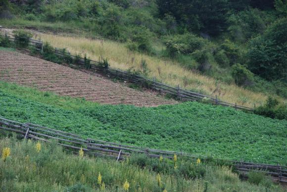 Най-добрите есенни сидерати за картофите