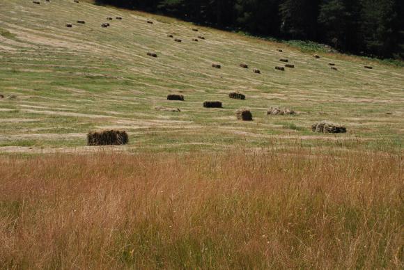 Държавата определи 251 агроекологични райони с полета, където не се извършват растителнозащитни мероприятия