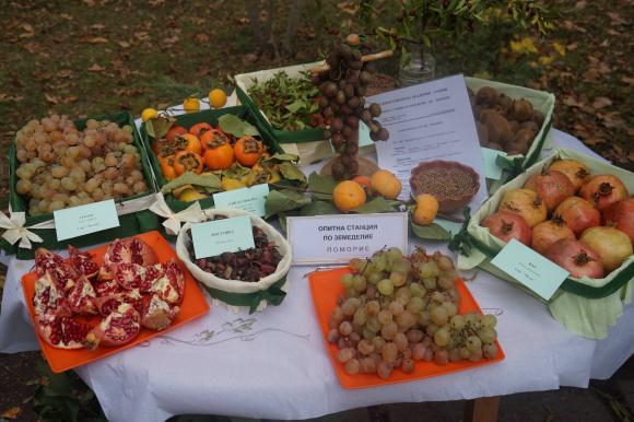 Фермерският пазар на 15 август е посветен на смокинята