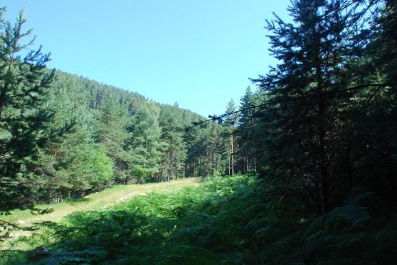 Всички гори в страната доказват отговорно управление по евростандартите