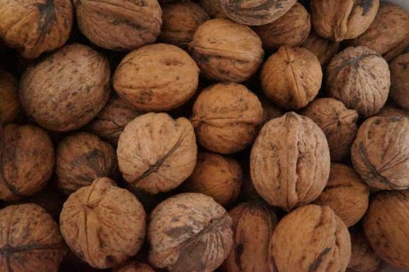 В Търговище отдават под наем орехови градини на търг