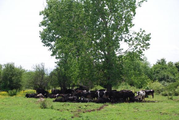 При хуманното отношение фермерите задължително водят дневник за часовете на дневната паша