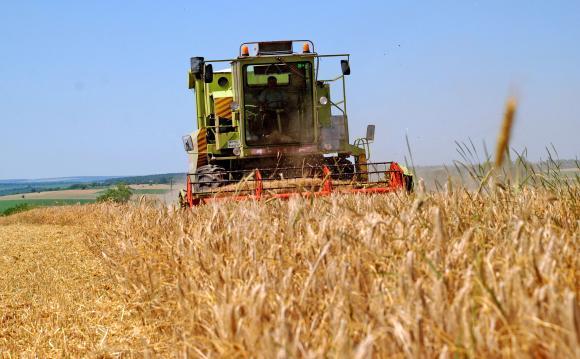 Само половината от пшеницата става за хляб