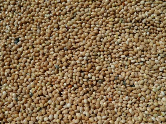 Продължава тенденцията за спад в цените на зърното на световните борси