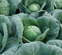 Сушата удари и производителите на плодове и зеленчуци