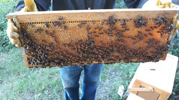 Грижи на пчеларя през септември