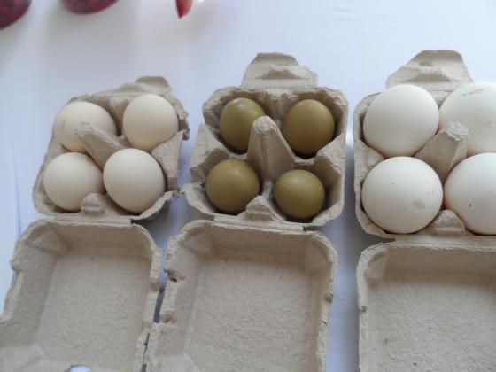 Отново пъдпъдъчи яйца на фермерския пазар в София
