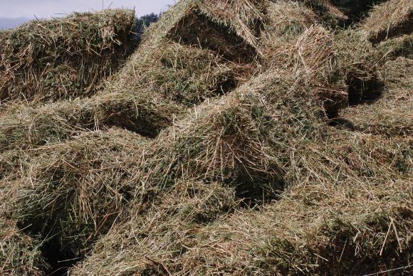 Как зърнените отпадъци се превръщат в биоразградими пластмаси