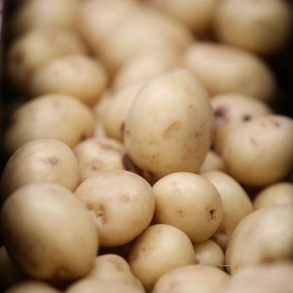 Последните новости в картофопроизводството показват на PotatoEurope 2018