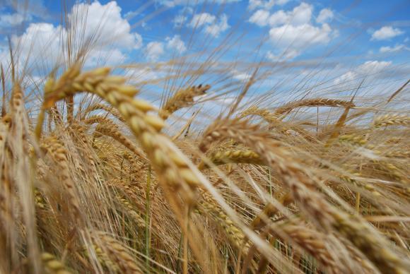 Австрия определи пакет от 60 млн. евро  компенсации за фермерите заради засушаването