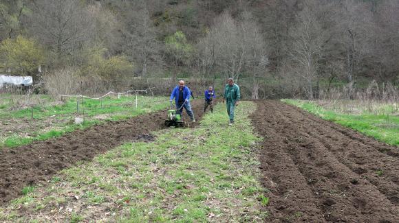 Обеззаразяване на почвата от гъбични инфекции