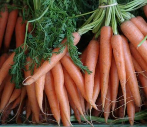 Предзимен посев на моркови