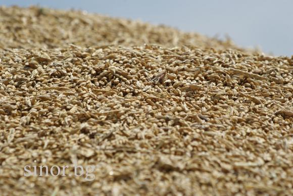 На борсата има обилно предлагане на хлебна пшеница на 405.00 лв/т