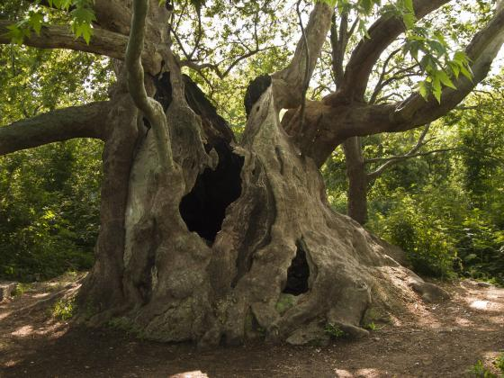Обучение по педагогика за горските