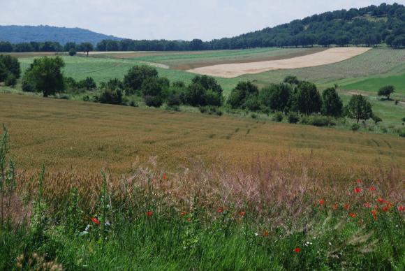 Зърнопроизводителите предлагат нов срок за деклариране на земята в реални граници