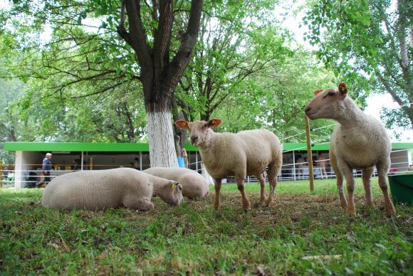 Фермер Експо е отворено още от днес за най-нетърпеливите животновъди