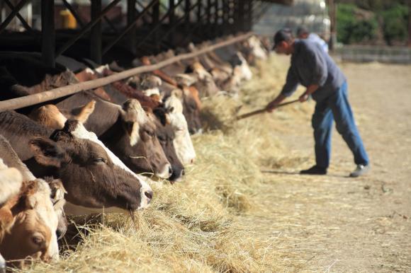 Двойно бреме за фермерите с новите осигуровки за 2019 г.