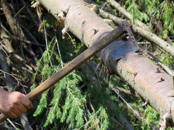 Заловиха кмета на село Петревене с незаконни дърва за огрев