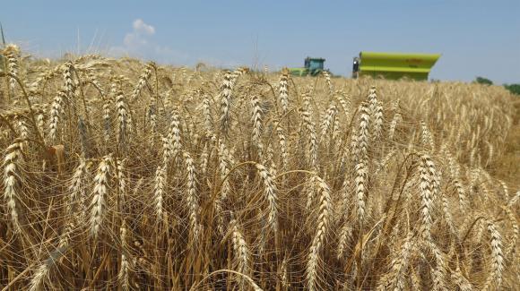 Вносът на хлебно и фуражно зърно в Турция през 2018/19 г. ще спадне с 25-27 на сто