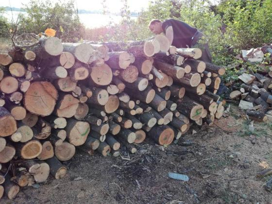 През изминалата седмица са задържани над 140 куб. м незаконни дърва за огрев, седем автомобила, шест моторни триона, коне и каруци.