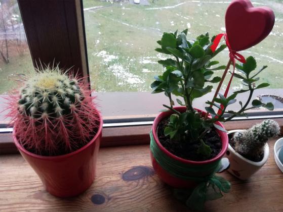 Пресаждайте веднага новозакупените растения