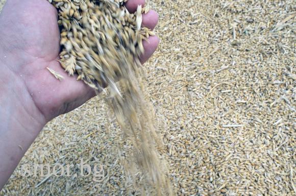 Черноморската пшеница отново  се наложи в мащабен международен търг