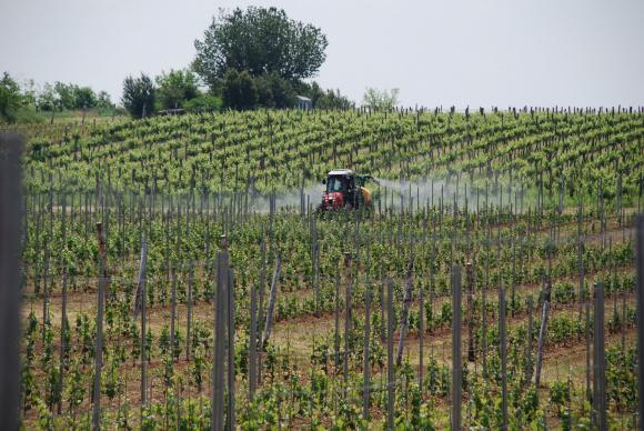 Отчитат добър финал за лозаро-винарската програма