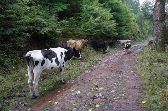 Предложението на БАБХ за затвор на стопани с животни не се отнася за стадата в задните дворове