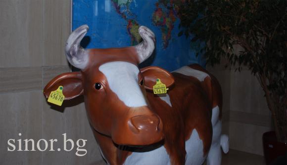 Поредна промяна в наредбите за училищните плодове и мляко