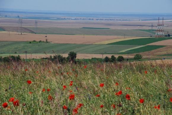 Сеитбата приключва с повече площи пшеница и ечемик и по-малко рапица